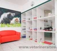 cat-hospital-kedi-hastanesi-177