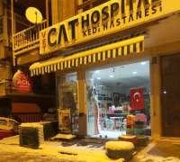 cat-hospital-kedi-hastanesi-195