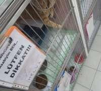 cat-hospital-kedi-hastanesi-213