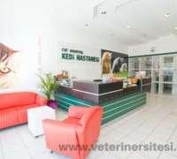 cat-hospital-kedi-hastanesi-216