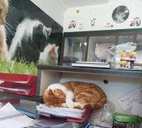 cat-hospital-kedi-hastanesi-321