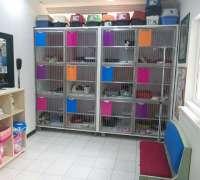 cat-hospital-kedi-hastanesi-482
