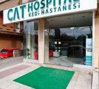 cat-hospital-kedi-hastanesi-740