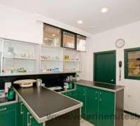 cat-hospital-kedi-hastanesi-835