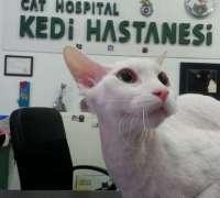 cat-hospital-kedi-hastanesi-931