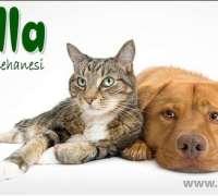 petzilla-veteriner-klinigi-206