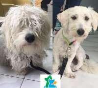 pandora-veteriner-klinigi-493