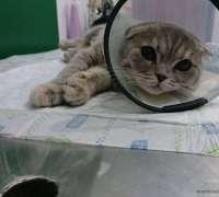 vetgo-clinic-veteriner-klinigi-892