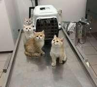 vetlife-veteriner-klinigi-404