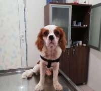vetlife-veteriner-klinigi-85