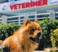 deniz-veteriner-klinigi-133