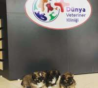 degirmendere-dunya-veteriner-klinigi-900