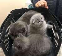 pet-house-veteriner-klinigi-190