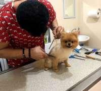 pet-house-veteriner-klinigi-510