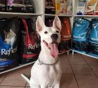 pet-house-veteriner-klinigi-853