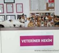 homeopati-veteriner-muayenehanesi-781