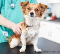 rante-veteriner-klinigi-226