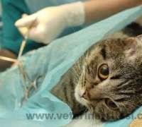 rante-veteriner-klinigi-548