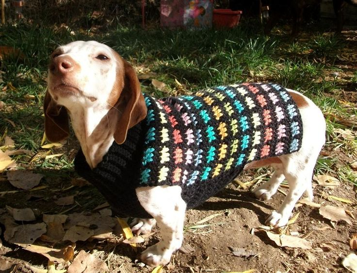 Free Easy Crochet Pattern For Small Dog Sweater 21th Blouse Wearing